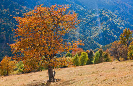 beautiful autumn scene in Apuseni mountains, Carpathians, Romania