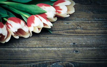 fresh tulips for easter greeting card