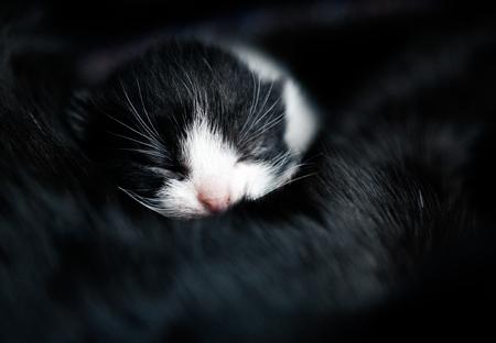 baby kitten peacefully sleeping