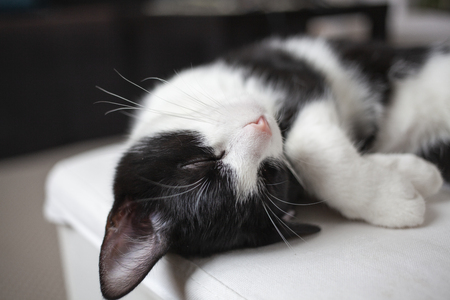 happy kitten sleeping on chair