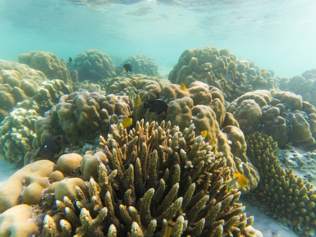 underwater marine life on coral reefs Stock Photo