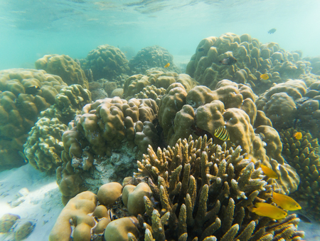underwater marine life on coral reefs Stock Photo - 120336026