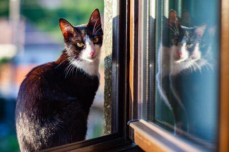 cute little black and white cat Reklamní fotografie