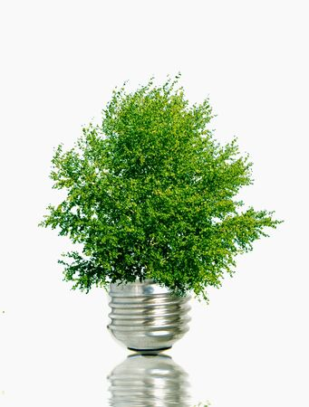 green tree in a light bulb - save energy, fight global warming
