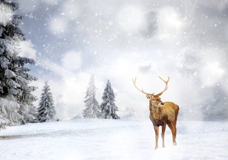 magical Christmas card with oble deermale in fairy tale winter landscape