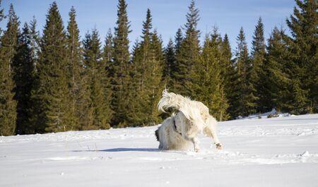 happy dog playing in fresh snow Archivio Fotografico