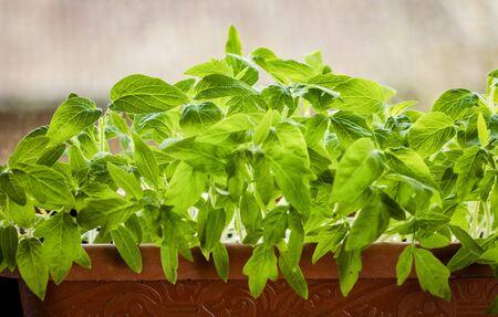 home gardening seedlings growing in a pot