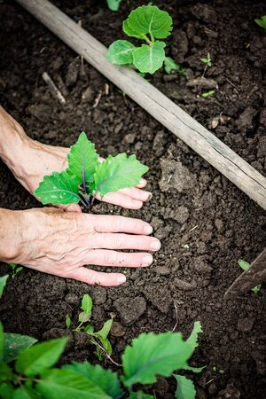 top view of hands planting seedlings gardening concept