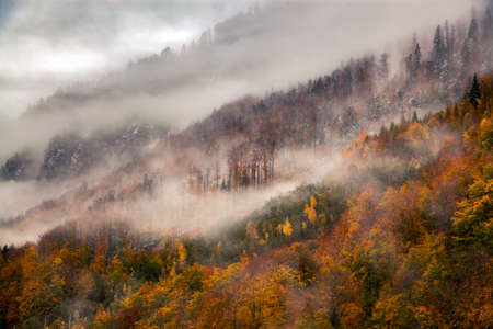 foggy forest background in autumn