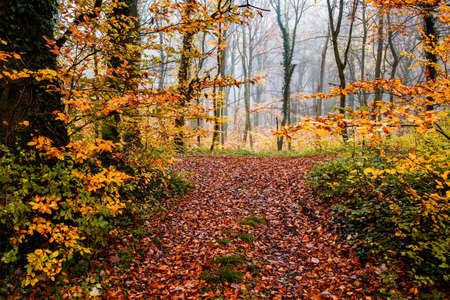 beautiful foggy forest in autumn