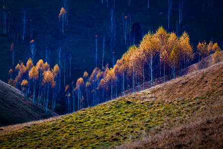 autumn background colorful trees in landscape 版權商用圖片