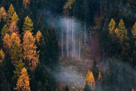 autumn nature background forest in fog 版權商用圖片