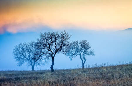 autumn background trees and fog at sunrise 版權商用圖片