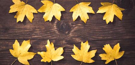 autumn background colorful foliage on wooden background 版權商用圖片