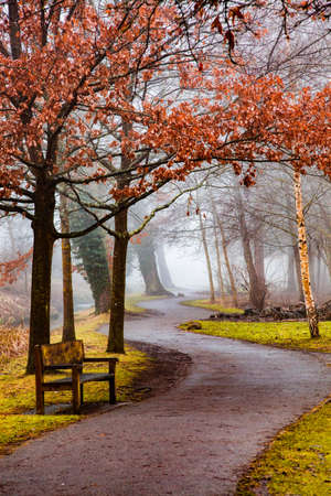 beautiful autumn park with bench and fog