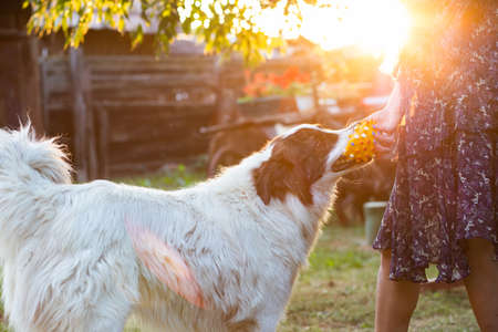 woman and white dog at sunset outdoors