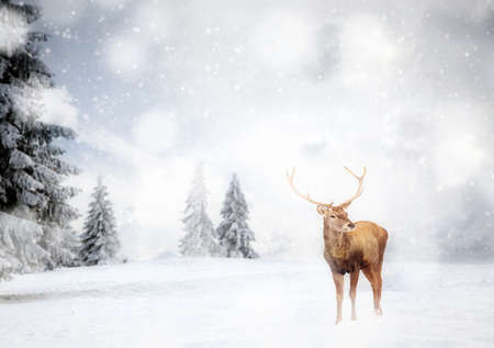 magical Christmas card with noble deer male in fairy tale winter landscape Stock Photo