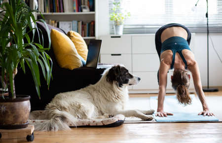 woman doing yoga at home with dog and laptop Reklamní fotografie