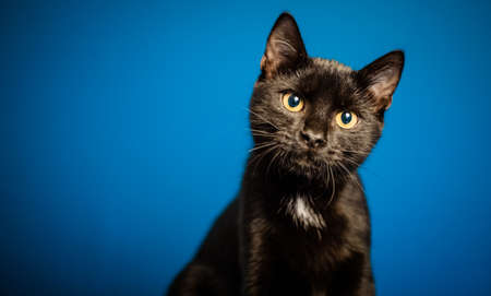 portrait of cute little black cat