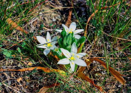 The first spring flowers in the garden. Sunlight.