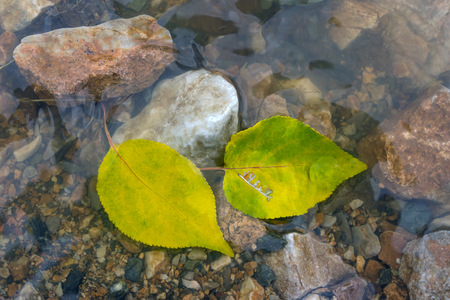 Autumn leaves in a stream. Bright autumn leaves lie in water. 스톡 콘텐츠