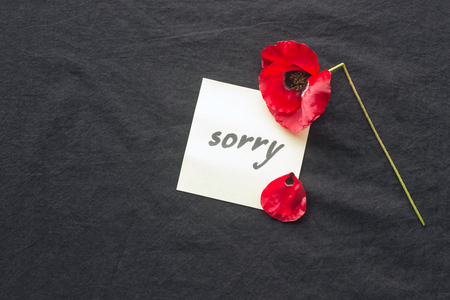 One red poppy flower broken on dark background. Note of apology- Sorry, please forgive me. Standard-Bild - 98426726