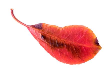 Colorful autumn leaves closeup. Isolated on white. Foto de archivo - 123329572