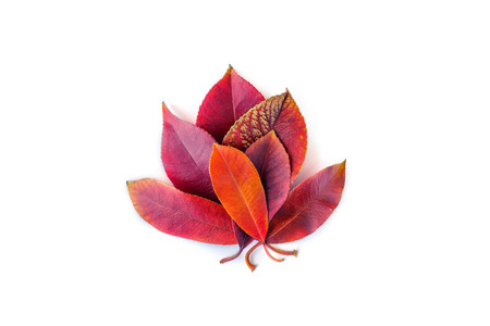 Colorful autumn leaves closeup. Isolated on white. Foto de archivo - 123329573