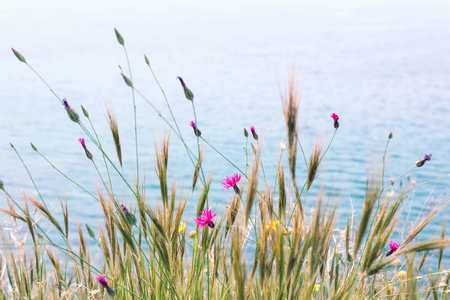 Beautiful spring flowers by the sea. Selective focus. Foto de archivo - 123216718