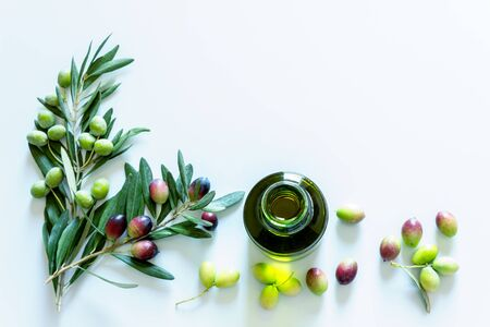 Olive branch and olive oil on light background. Ripe colorful dark and green olives on a branch. Copy space.