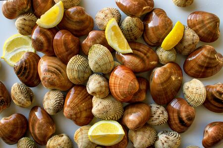 Fresh clams, raw cockles on a white table. Concept - Clean Monday, healthy food, aphrodisiac; Mediterranean Diet.