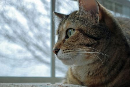 peers: A precious cat named Lily peers out the window at birds.