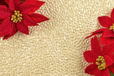 Plenty of copy space on a gold textured background surrounded by jolly red and gold poinsettias.