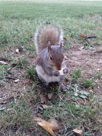 Squirrel eating chip