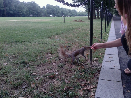 Squirrel eating chip from girls hand