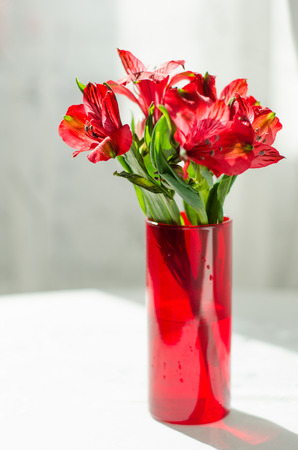 alstromeria: bouquet of red alstroemeria in vase on white table Stock Photo