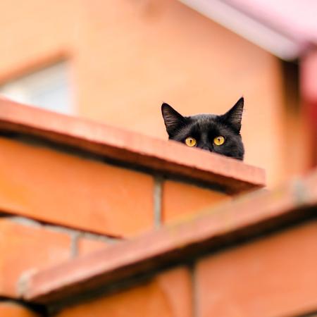 peeking: black cat peeking out from behind wall Stock Photo