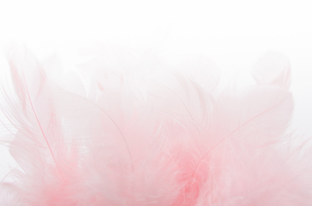 A bunch of soft light pink feathers on white blurred background. Soft focus. Texture.
