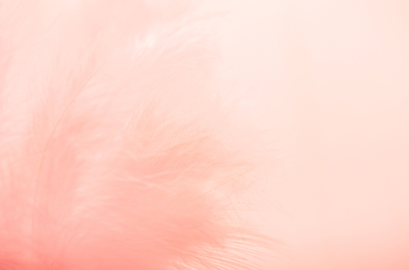 Background from feathers of coral color. Soft focus, texture