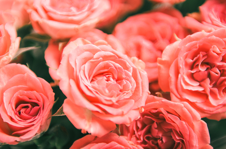 Coral roses in a bouquet. Floral background
