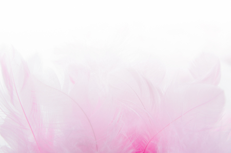 A bunch of pink feathers on a white blurred background. Soft focus. Texture