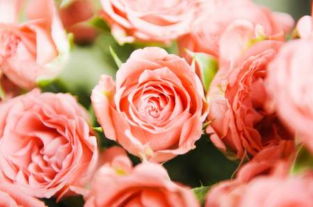 Pink small roses in a bouquet. Floral background