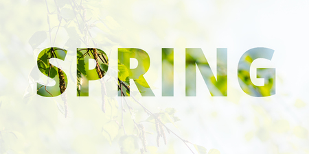Spring background, banner. The inscription Spring on the background of a blossoming birch tree. Multiple exposure, double exposure