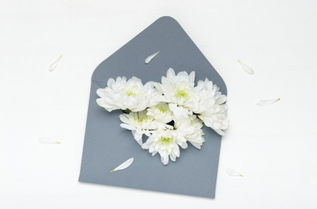 White flowers of a chrysanthemum in a blue envelope on a white background. Spring congratulation gift. Top view, flat lay Stock fotó