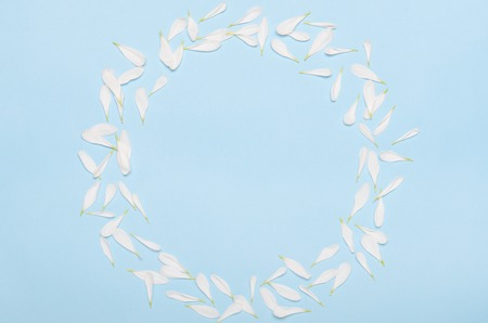 Round frame of petals of white chrysanthemum flowers on a pastel blue background. Minimal spring background. Copy space, top view, flat lay Stock fotó