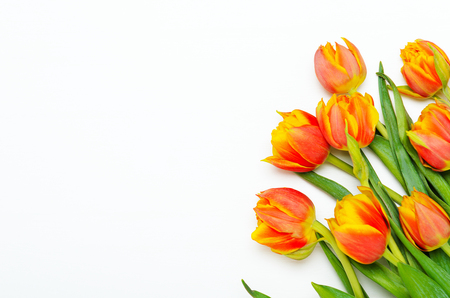 Bouquet of red-orange tulips on a white background. Spring floral background. Copy space, top view, flat lay Stock fotó