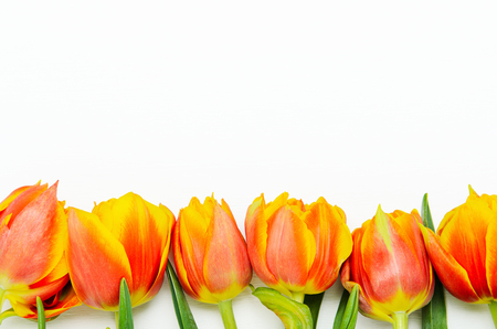 Frame from red-orange tulips on a white background. Spring floral background. Copy space, top view, flat lay Stock fotó