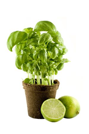 Basil plant & lime isolated on white background photo
