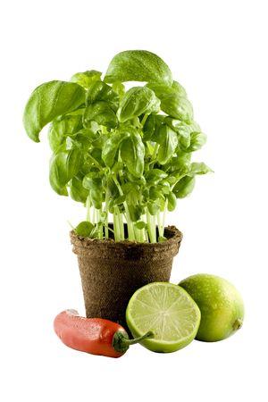 Basil, lime & chili isolated on white background photo