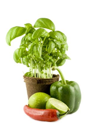 Basil, lime, chili & green bell pepper isolated on white background photo